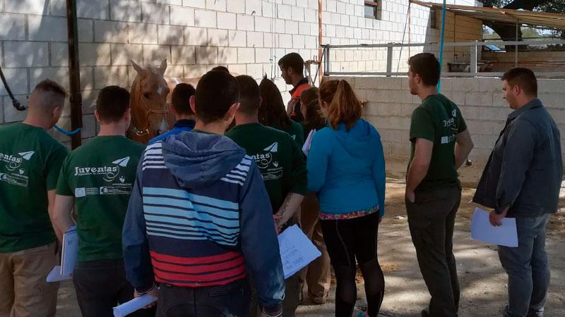 Proyecto de especialización territorial juvenil 'Juventas'. Grada 126. Diputación de Cáceres