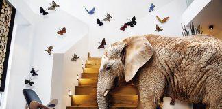 El elefante en la habitación. Grada 133. Amparo García Iglesias