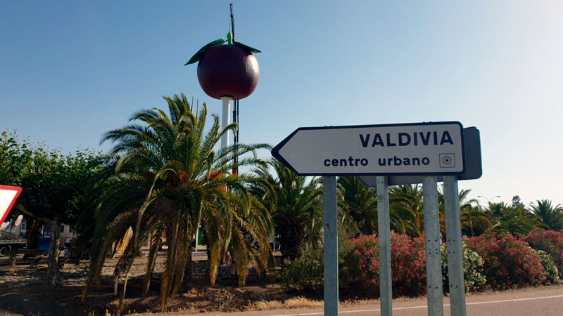 La Diputación de Badajoz instala el icono representativo de la ciruela en Valdivia. Grada 137. Diputación de Badajoz