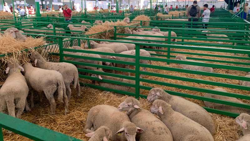 La mejor Feria de Zafra en 20 años congrega a más de un millón de personas. Grada 138. Qué pasó