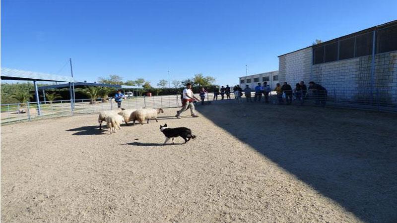 La Escuela de Pastores de Extremadura oferta un seminario sobre Adiestramiento de Perro Pastor