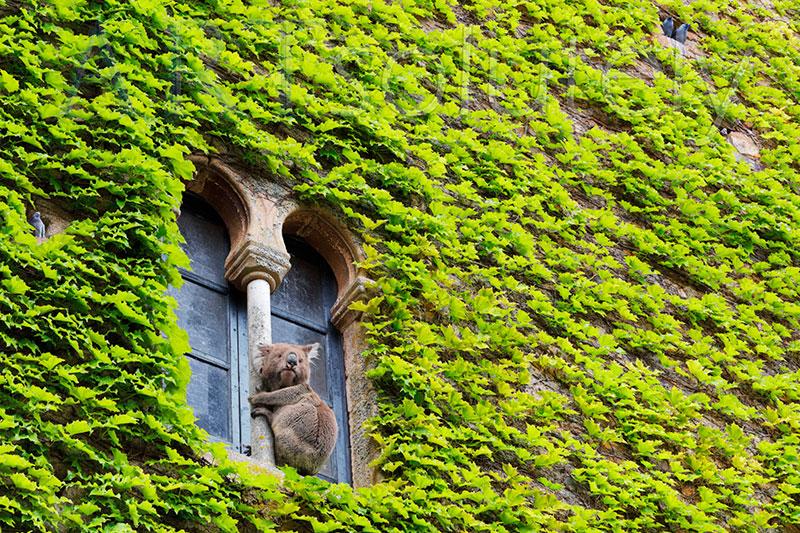 'En busca de un eucaliptus', Foto: Fernando Paramio