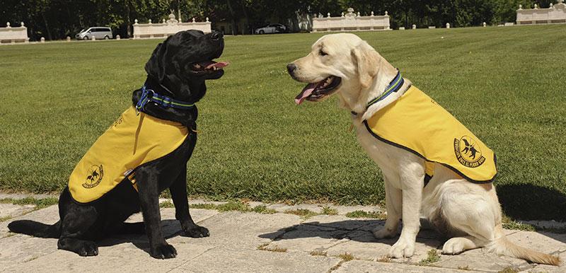 Foto: Fundación ONCE del perro guía